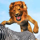 lion king simulator