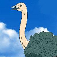 Vogel Strauß Simulator