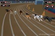 Crazy Dog Racing: Dogs Racing