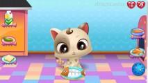 Cómo Cuidar A Un Lindo Gatito: Feed Cat