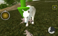 Wild Wolves Simulator: Eating Rabbits
